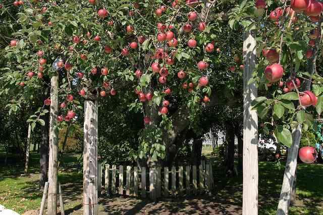 """木 りんご の 『りんごの木』の""""子ども達のミーティング""""に学ぶ、保育者のあり方"""