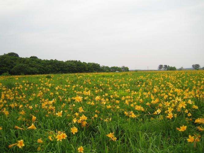 ベンゼ湿原 (2)