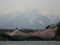 ㉖鶴田町の桜2014【5】 西澤 淳27