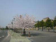 ㉑鶴田町の桜2014【1】 西澤 淳22