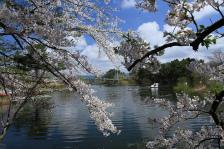 ⑭木村崇「春の芦ノ湖(藤枝ため池)」(景色)