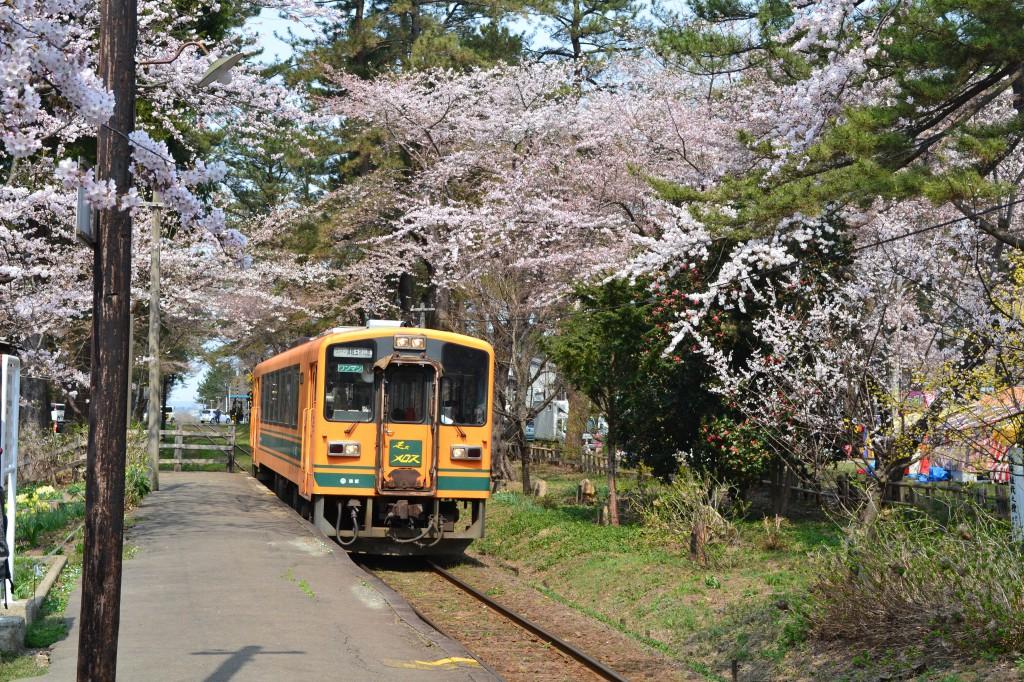 ②桜と「走れメロス」佐藤 敬