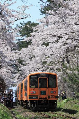 ㊴木村崇「桜のトンネルを行くメロス」(春~夏)