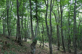 10森林浴