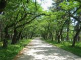 芦野公園 (4)