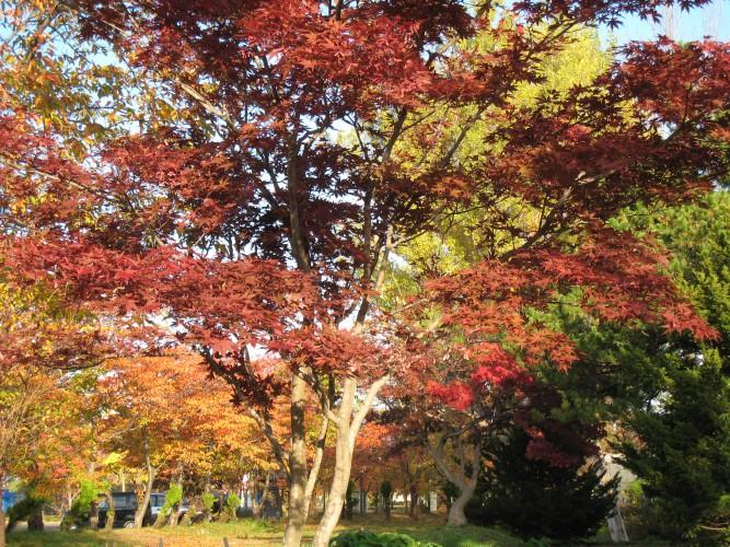 菊が丘公園 (6)