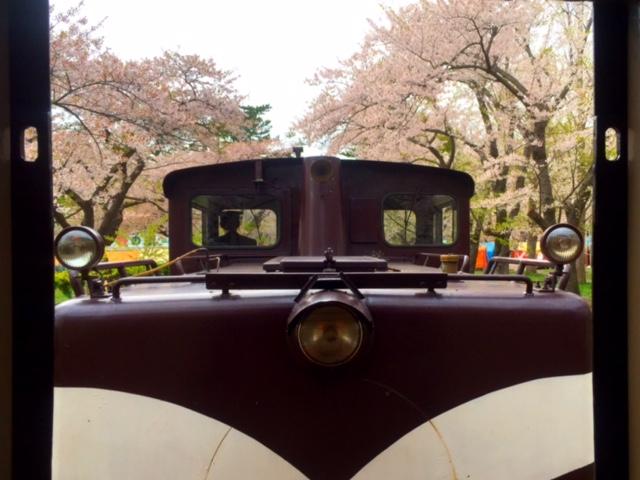 桜と機関車。